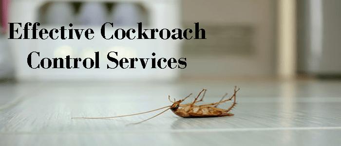 Effective Cockroach Control Service