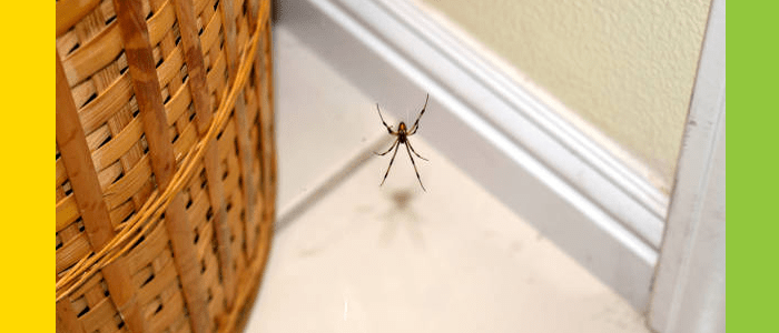Spider Control Woollahra