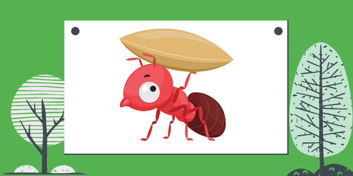 Types Of Ants That Might Invade Your Home